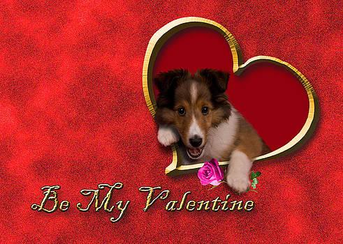 Jeanette K - Be my Valentine Sheltie Puppy