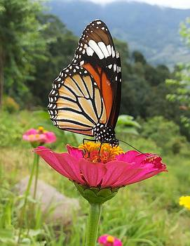 Beautiful Butterfly  by Smrita Pradhan