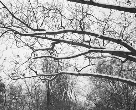 Beauty in winter by Stacie  Goodloe