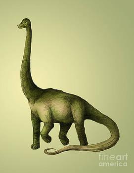 Spencer Sutton - Brachiosaurus