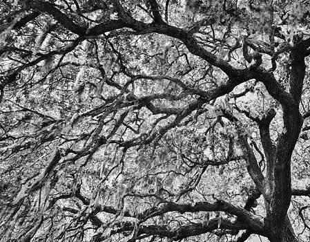 Paulette Thomas - Branches