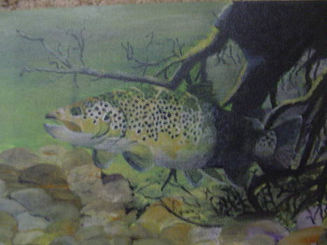 Brown Trout by Stephen Thomson