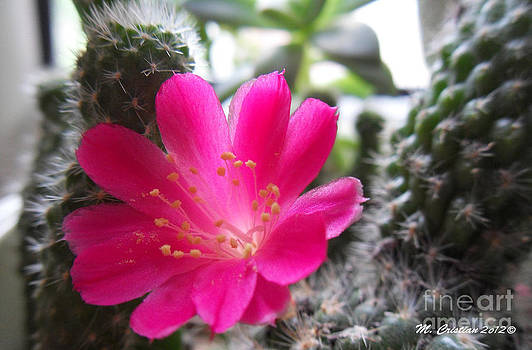 Cactus delight by Mada Lina