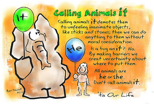 Calling Animals It by Ben Isacat