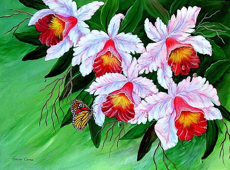 Cattleya Orchid by Fram Cama