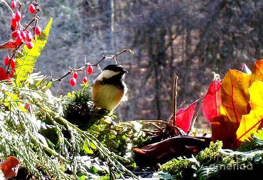 Chickadee by Virginia Pakkala