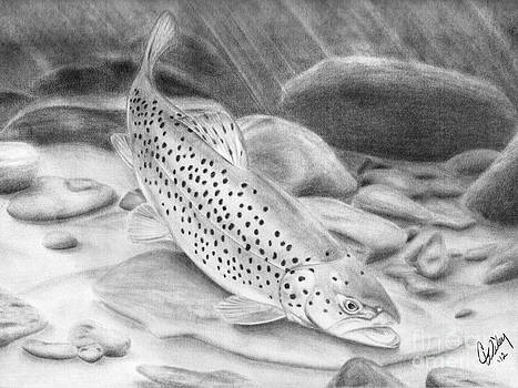 Colorado Brown Trout by Chris Wiley
