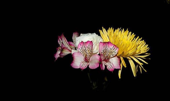 Colors by Cecil Fuselier