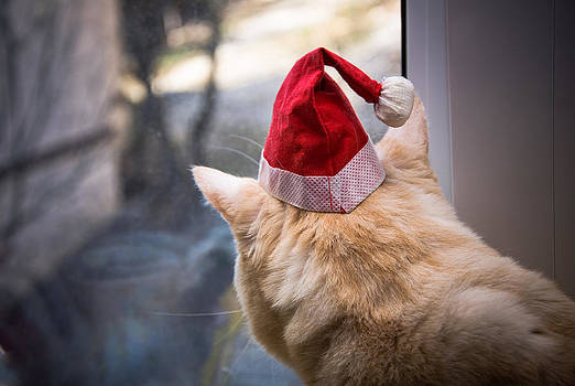 Do Cats Dream Of Santa ? by Dockside Colors