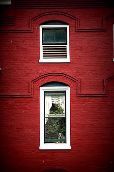 Laurie Perry - Doggie in the Window