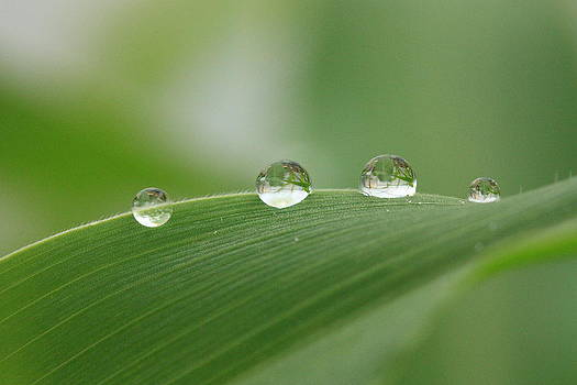 Droplets by Rebeka Dove