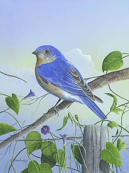 Eastern Bluebird by Mike Brown