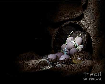 Eggs in a basket by Cecil Fuselier
