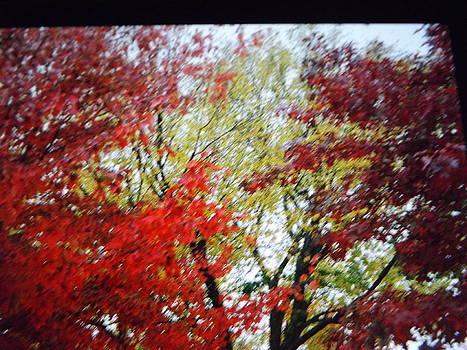 Fall 2013 by Theresa Crawford