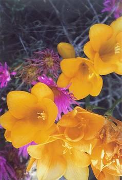 Floral Wonder by Robert Bray