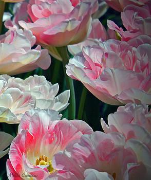 Flower Garden by Mikki Cucuzzo