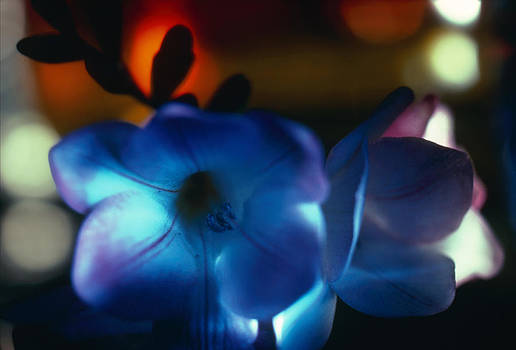 Flowers  by Etti PALITZ