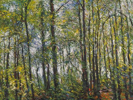 Forest by Jack Tzekov
