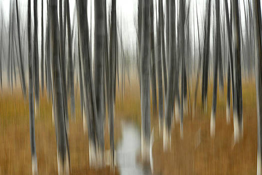 Forest Of Trees Killed By Acidic Water by Raul Touzon