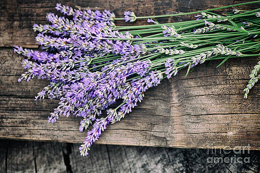 Mythja  Photography - Fresh lavender