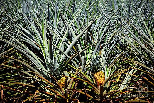 Cheryl Young - Fresh Pineapple