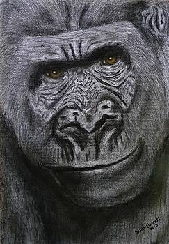 Gorilla Portrait by David Hawkes