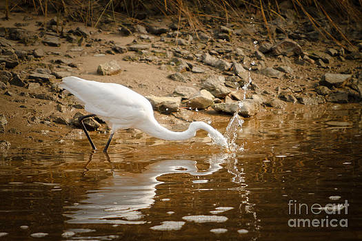 Michael McStamp - Great Egret