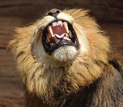 Paulette Thomas - Hear Me Roar