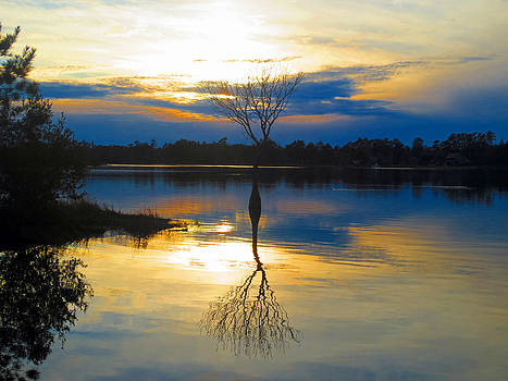 Lake Moultrie Reflections by Lisa Jones
