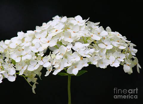 Les Fleurs by Debra Pruskowski
