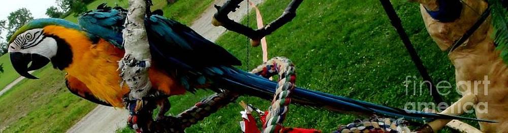 Gail Matthews - Macaw Parrot goes Camping