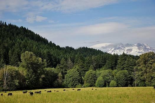 Mount Rainier by Ronald Hanson