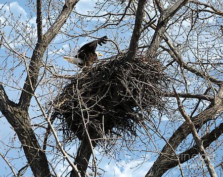 Nesting by Lori Tordsen