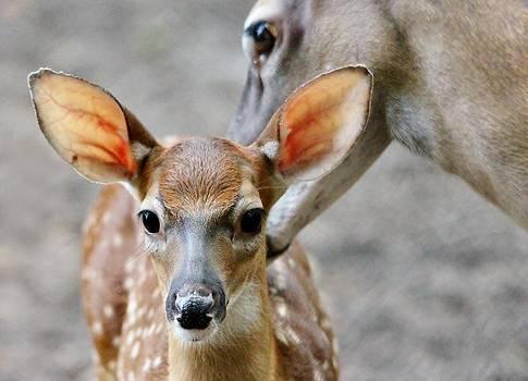 Paulette Thomas - Oh Deer