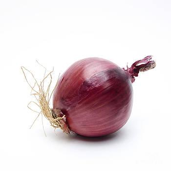 BERNARD JAUBERT - Onion