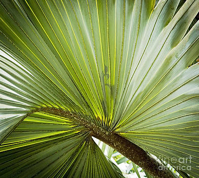 Tim Hester - Palm Leaf Background