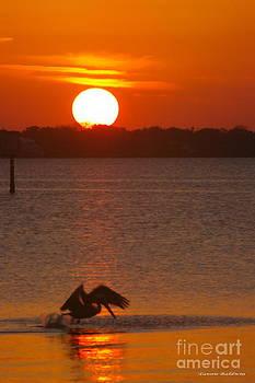 Tannis  Baldwin - Pelican sunset