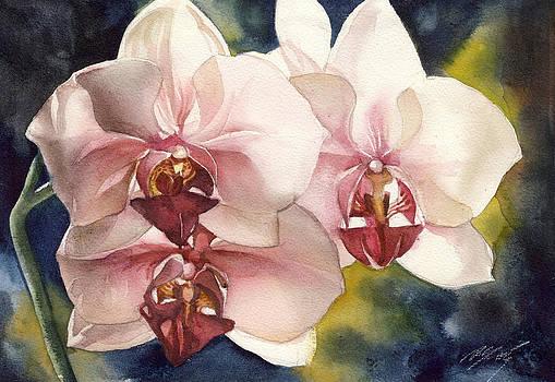 Alfred Ng - pink phalaenopsis orchid