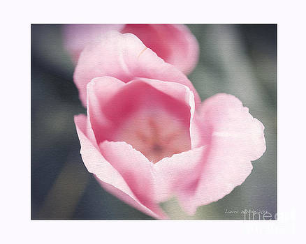 Artist and Photographer Laura Wrede - Pink Tulip