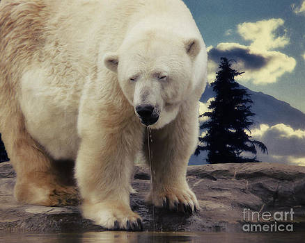 Angela Doelling AD DESIGN Photo and PhotoArt - Polar Bear