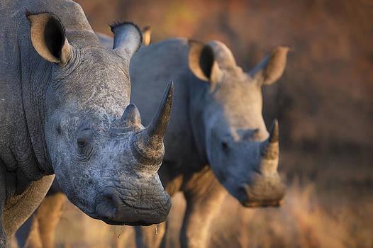2 Rhinos by Mario Moreno