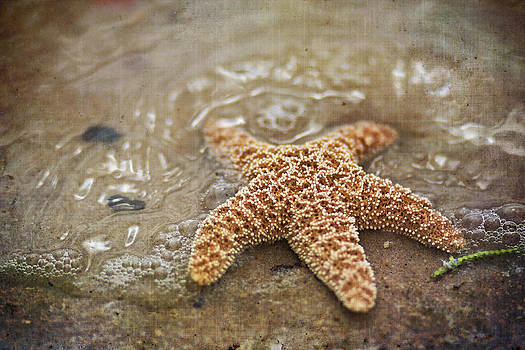 Regina  Williams  - Starfish on beach
