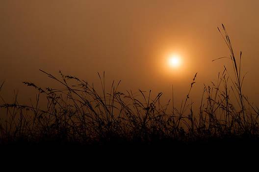 Sunrise over the misty forest. by Chaiyaphong Kitphaephaisan
