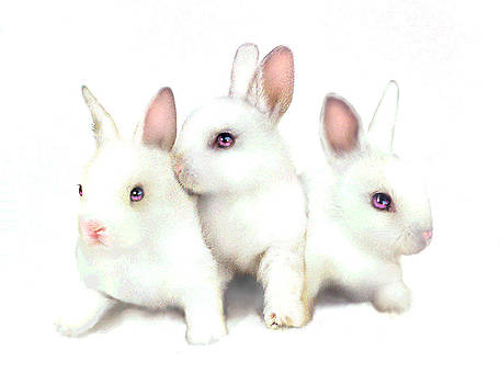 Three Bunnies by Robert Foster
