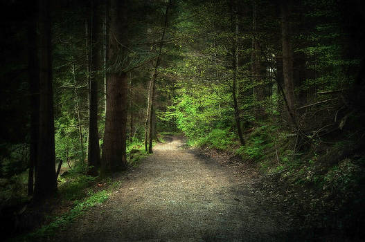 Svetlana Sewell - Through the Woods
