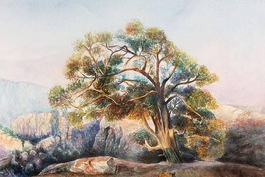Tree by Ahmad Subaih