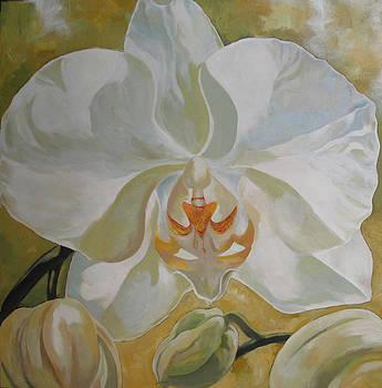 Alfred Ng - white phalaenopsis orchid
