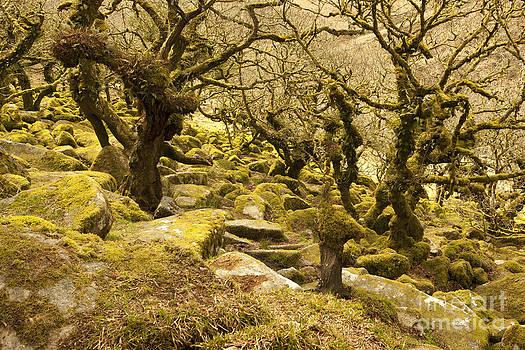 Wistmans Wood by Paul Felix