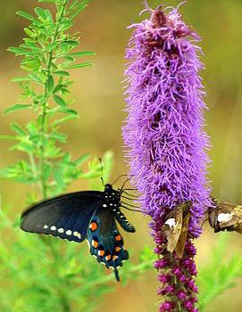 Marty Koch - 237 Butterfly