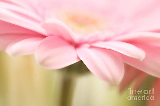 LHJB Photography - Gracefully Blooming